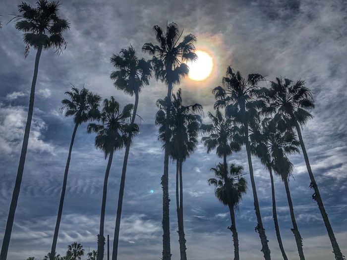 Taking advantage of a break in the rain. Palm Tree Nature Nature_collection Nature Photography Sky Plant Cloud - Sky Growth Tree Low Angle View Beauty In Nature