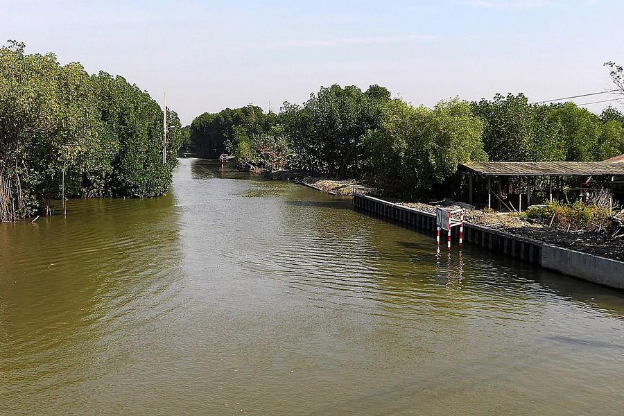 Big water lagoon alone the mangrove forest,Bangkok Thailand Beauty In Nature Day Nature Plant Tranquility Tree กรุงเทพมหานคร การสะท้อน บึงน้ำ ประเทศไทย ป่าโกงกาง