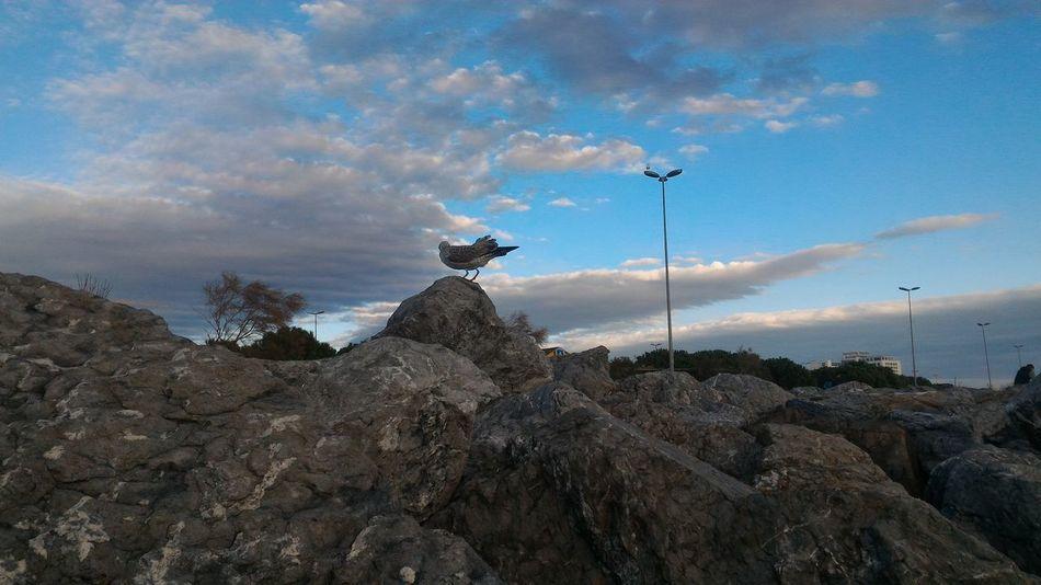Bird Technology Antenna - Aerial Sky Animal Themes Cloud - Sky