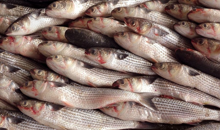 Fresh grey mullet fish for sale at the fish market in Taiwan Aquaculture Fish Fish Market Fishery  Freshness Healthy Eating Market Market Stall Mullet Mullet Fish Raw Food Seafood