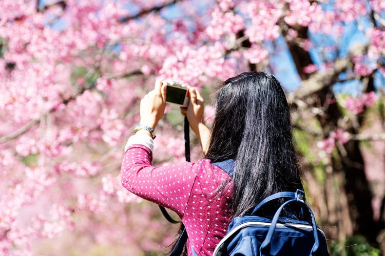 Back view of woman taking photo of cherry blossom Woman Taking  Photo Cherry Blossom Flower Pink Travel Camera Traveler Back View Nature Photography Photographer Floral Flora Blooming Outdoor Beautiful ASIA Asian  Plant Day Season  Spring Branch Garden Tree Natural Thailand Chiangmai Photography Themes Flowering Plant Photographing Pink Color Springtime Outdoors