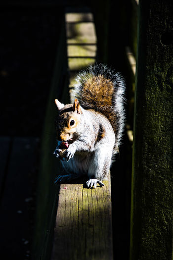 So you think you can squirrel your way into my life?...... You're nuts. One Animal Animal Themes Close-up Squirrel Squirrel Photo Squirrel Eating Nikon Photography Nikon D810 For The Love Of Photography Beauty In Nature Outdoors Animals In The Wild