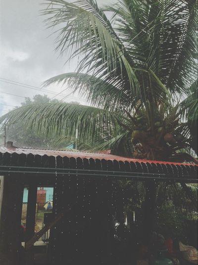 Raining Day Raining Season Monsune