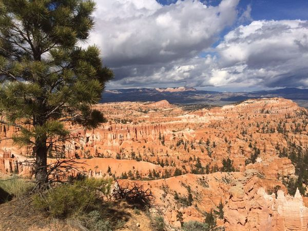 My favorite canyon Nature Tranquility Beauty In Nature Tranquil Scene Scenics Sky Remote Physical Geography Rock - Object No People Non-urban Scene Day Landscape Outdoors Arid Climate Tree Cloud - Sky Bryce Canyon Canyon Tree Clouds And Sky Fresh On Eyeem