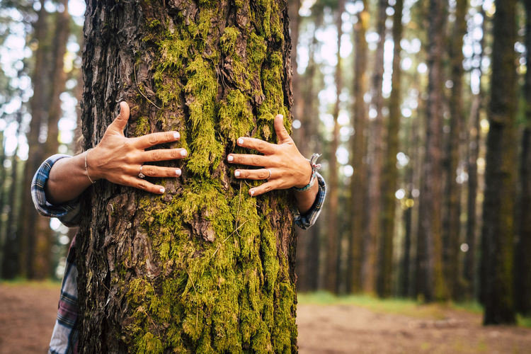 Midsection of person embracing tree trunk in forest