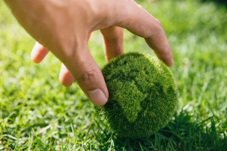 Close-up of hand holding grass