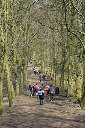 Hampstead Heath The Traveler - 2018 EyeEm Awards The Great Outdoors - 2018 EyeEm Awards Walking In The Woods Parks And Recreation Park View People Of EyeEm People Walking  3XPUnity Taking Photos Close-up