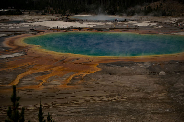 The grand Prismatic Spring in Yellowstone national park Colors National Park Natural Nature Steam Wyoming Yellowstone Yellowstone National Park Beauty In Nature Day Geology Geyser Grand Prismatic Spring Heat - Temperature Hot Spring Landscape Nature Outdoors Power In Nature Steam Tourism Tranquility Travel Destinations Tree Water first eyeem photo