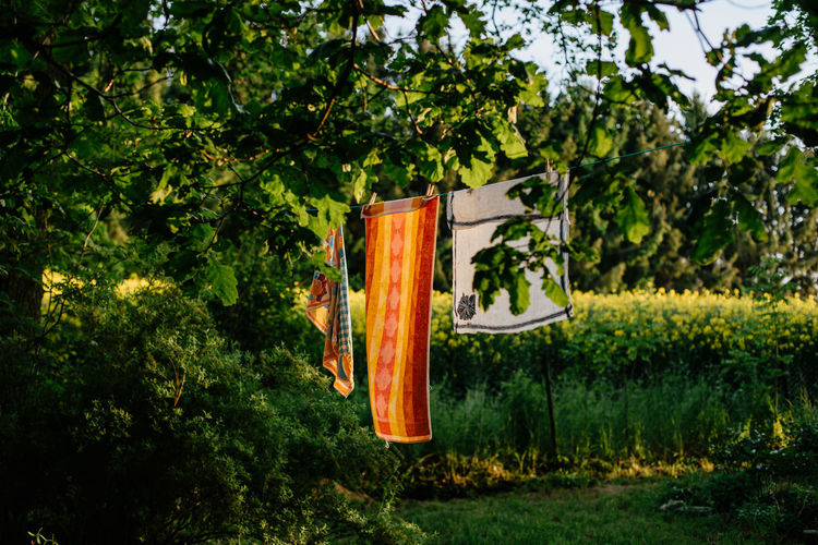 Colorful towels hanging to dry in a garden