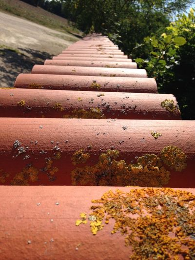 Narrow stairs along plants