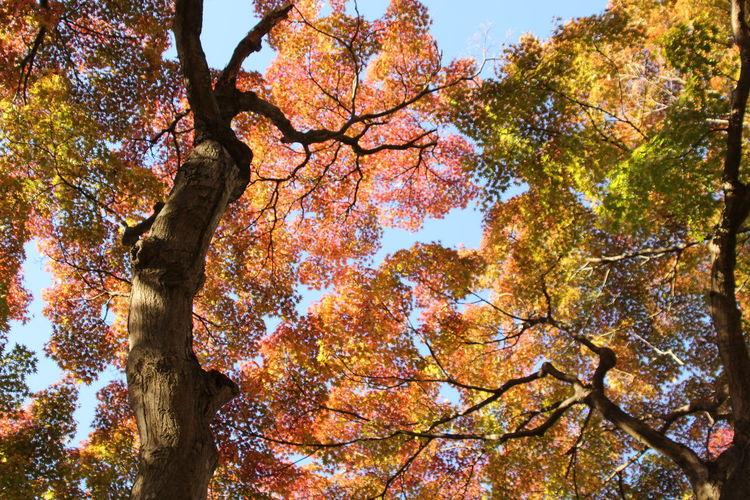 Autumn Autumn Colors Autumn Leaves Japan Japan Photography Autumn🍁🍁🍁