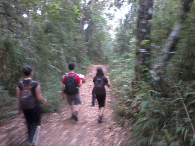 The high road Adventure Beauty In Nature Blurred Motion Day Forest Full Length Growth Leisure Activity Lifestyles Men Motion Nature Outdoors People Real People Rear View Scenics Togetherness Tree Tree Trunk Walking Young Adult