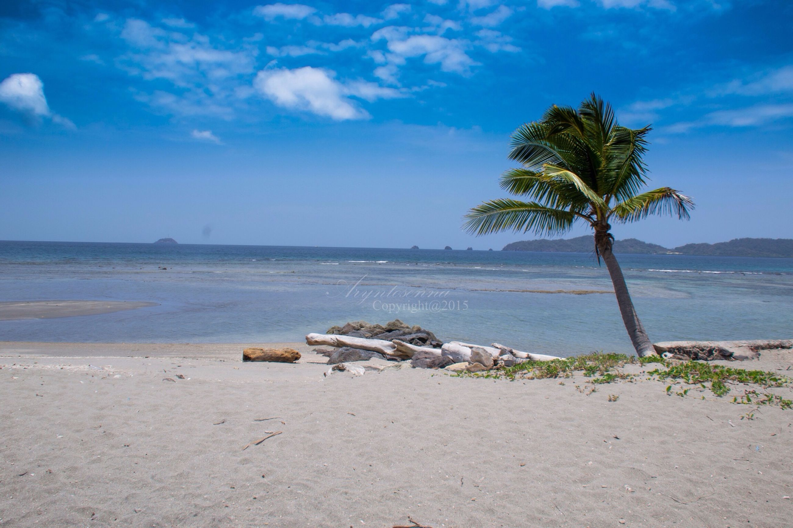 sea, water, sky, beach, tree, tranquility, tranquil scene, palm tree, shore, sand, scenics, horizon over water, nature, beauty in nature, blue, cloud, day, cloud - sky, idyllic, outdoors
