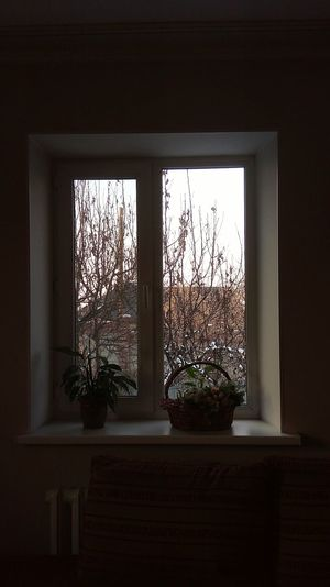 Window Curtain Tree Indoors  No People Day Close-up Modern Evening Evening Sky Nature Winter Beauty In Nature Freshness Sky Hot Winter