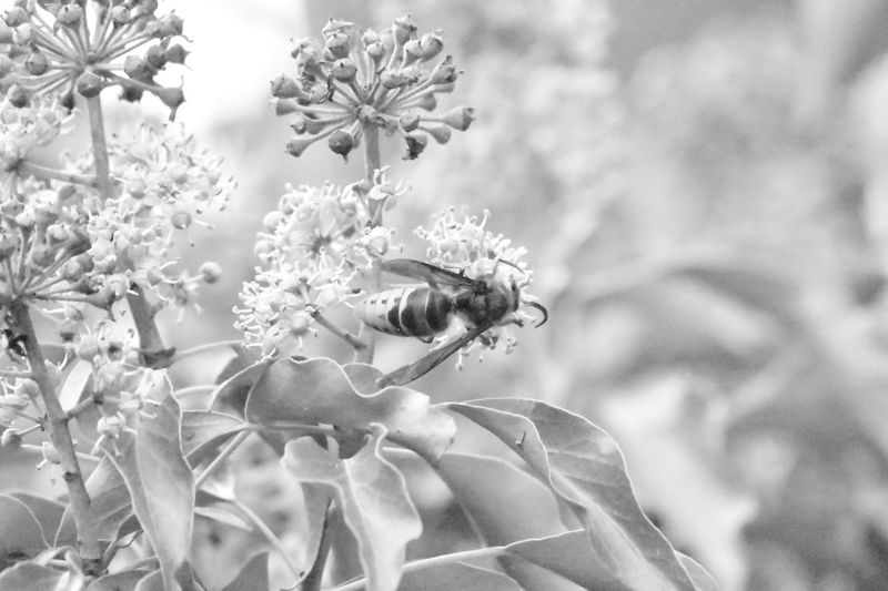 Beauty In Nature Close-up Flower Focus On Foreground Fragility Hymenoptera Insect Nature Nature Photography Nature_collection Selective Focus Vespidae Wasp Wasp Macro
