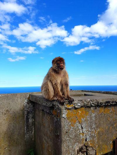Meet my new amigo 😀❤Horizon Over Water Monkeybusiness  España🇪🇸 Love Animals💕 Nature_collection Happiness ♡ England🇬🇧