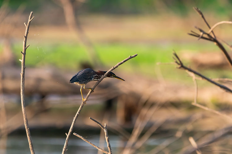 Close-up of bird perching on a land