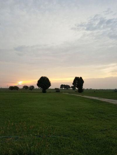 Tree Sunset Low