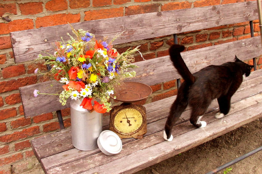 Beauty In Nature Black Cat Cat Day Domestic Animals Domestic Cat Flower Fragility Growth Kitchen Scale Mammal Milk Churn Nature No People Old Outdoors Petal Pets Pink Color Plant Vintage