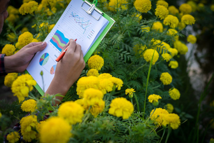 Cropped image of man analyzing graph by flowering plants