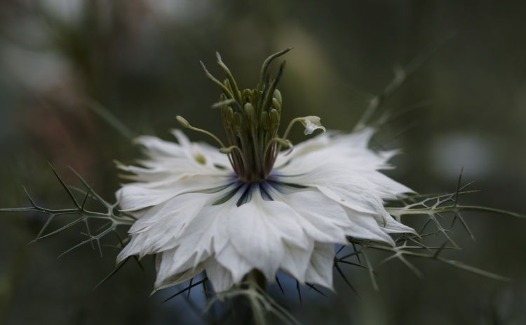 #flower #white