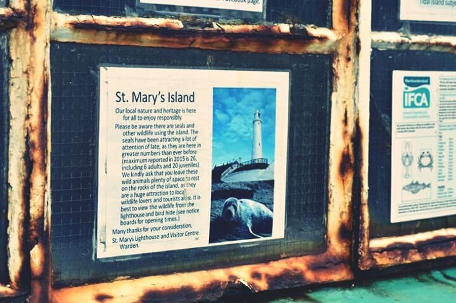 St Marys Island St Marys Lighthouse Whitley Bay Seal