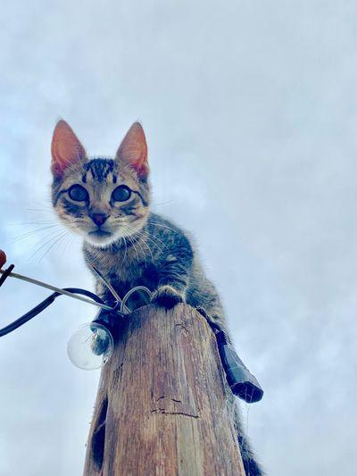 Exploring Cats