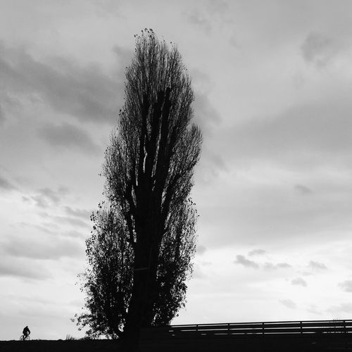 Big and old poplar tree, withstanding all weather conditions and river floodings, located near river Sava and Liberty Bridge in Zagreb, Croatia, 2016. Poplar Poplar Tree Bridge Silhouette Zagreb Croatia Streetphotography Sky Tree Scenics Outdoors Beauty In Nature Nature Bike Bicycle Biker Fence Adapted To The City