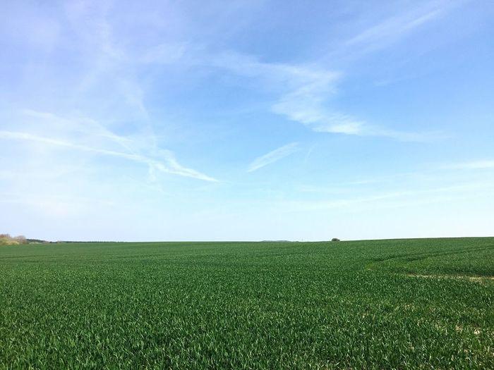 Green Landscape Blue Sky Copy Space