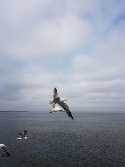 Bird Gulls In Flight Outside Photography EyeEm Selects Bird Sea Flying Sky Horizon Over Water