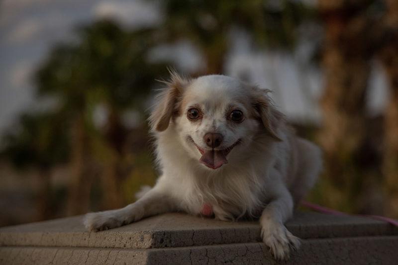 Portrait of dog sitting on wood