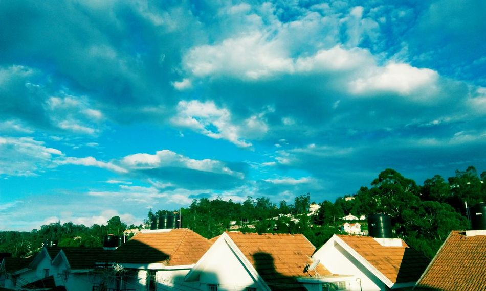 Sky And Trees Roof Top Beautiful ♥