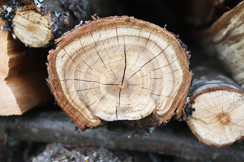 Close-up Cross Section Day Deforestation Forestry Industry Log Lumber Industry Nature No People Outdoors Stack Textured  Timber Tree Ring Tree Stump Wood - Material Woodpile