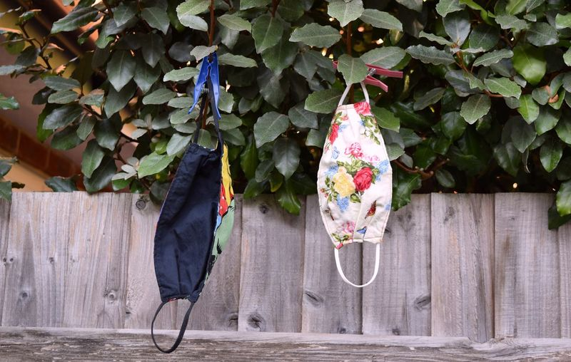 Close-up of mask hanging by plants