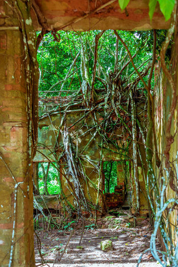 Ruins of Paricatuba Abandoned Buildings Amazon Amazonas Architecture Built Structure Nature No People Paricatuba Ruins Tree Tree Roots Torn Out Of Ground