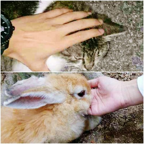 meow vs rabbit😍😍..wlaupun kte mnt bnda y blainan..sy ttp syg awk!🙈🙈