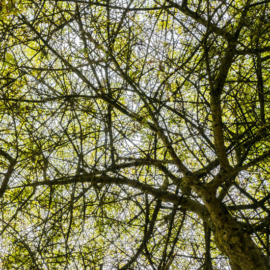 Looking up Branches Chaos Nature Tree Branch Branches And Sky Day Leaf Leaves Pattern