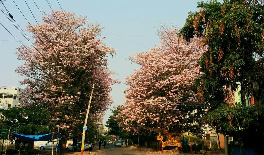 Trees Pink Nature Sky CityGreen Tree Outdoors Growth Day Sky No People Nature Bangalore First Eyeem Photo