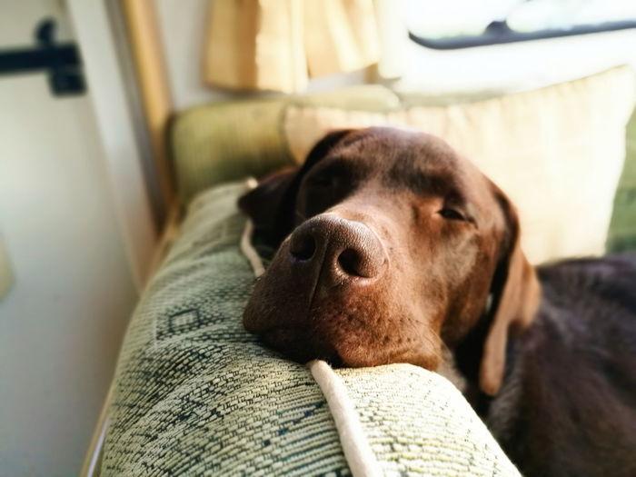 Lazy Days Dog
