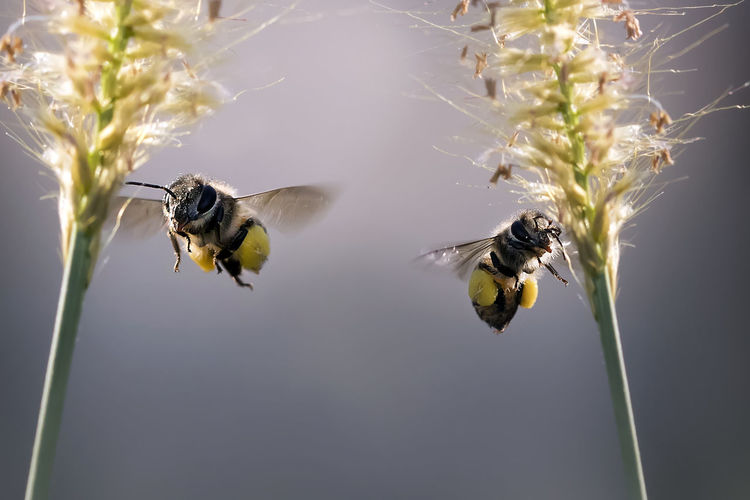 Close-Up Of Insects Buzzing By Plants