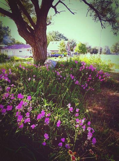 beaut. Nature Flowers Pretty