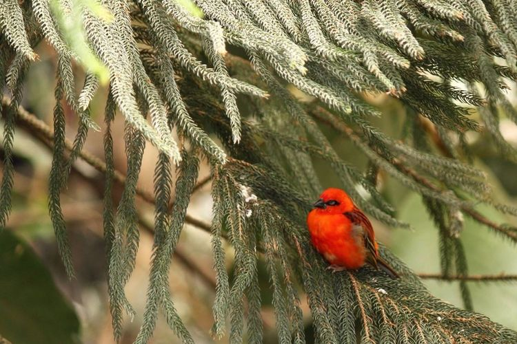 Cardinal perching on plant