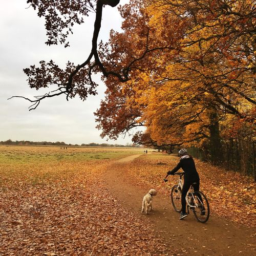 Full length of man with bicycle in autumn against sky