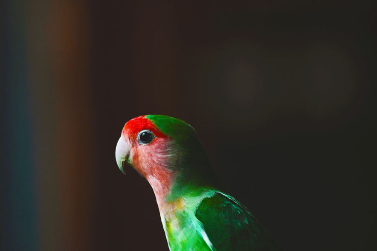 Close-up of a parrot