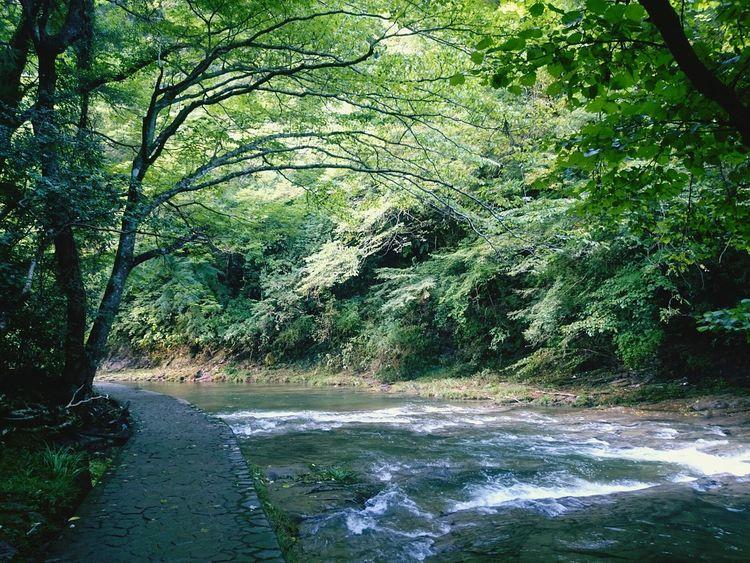 養老渓谷 Water River お出掛け Enjoying Life Japanese  Trip Photo Trip Tree Yōrō Keikoku