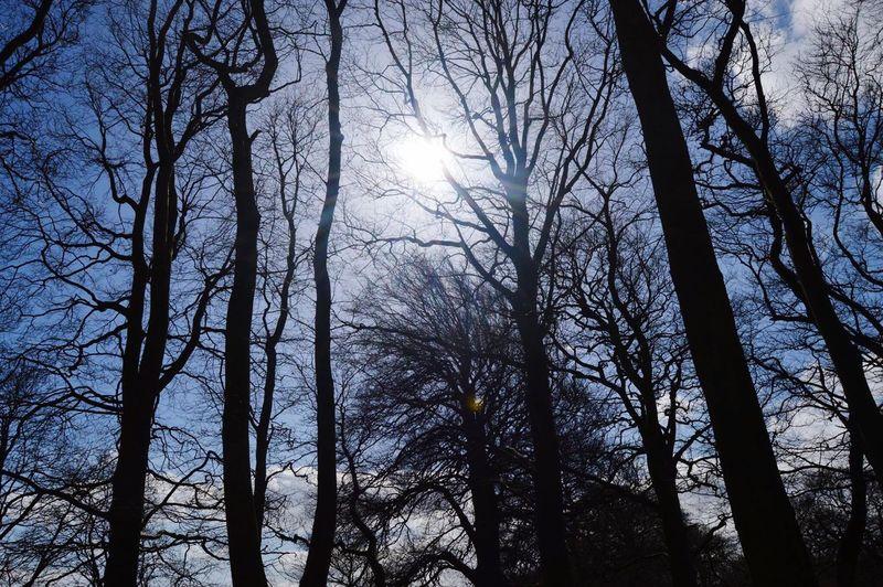 Trees Silhouette Sky