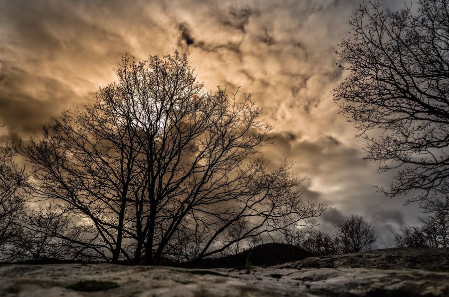 Hdr_Collection Nikonphotography Nikon HDR Bare Tree Sky Nature Tree Beauty In Nature Scenics Winter Cloud - Sky Tranquility Landscape Tranquil Scene Outdoors Day No People Sunset