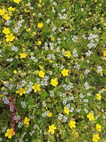 ein Blumenteppich im Freien. 💕💗 Monique52 Unterwegs Blumenwiese Naturfotografie Blüte Natur Hochrhein The Purist (no Edit, No Filter)