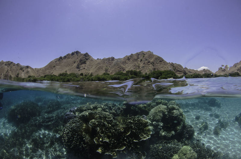 Over and under shot in Komodo Beauty In Nature Clear Sky Close-up Day Mountain Nature No People Outdoors Scenics Sky Tranquil Scene Tranquility UnderSea Underwater Water Waterfront