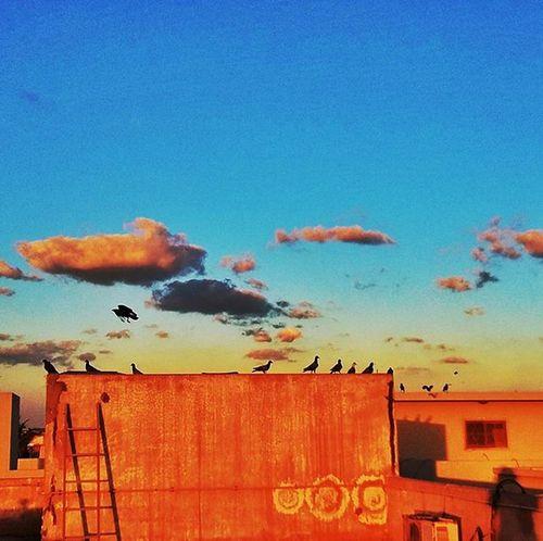 Karachi Pakistan Aimanadeel Birds Birdsofinstagram Sunset Sunsetsniper Inlove Love Colors Travelgram Photographerslifeforme Photooftheday Clouds Evening Yummy Music GodIsAnArtist
